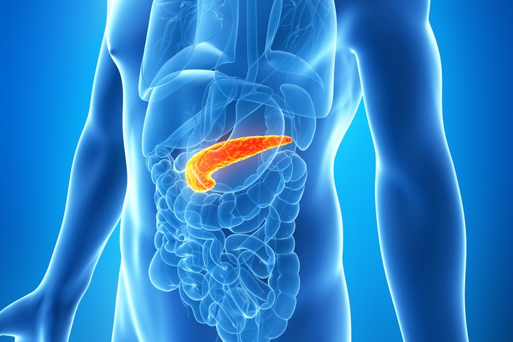 The Digestive Process : What is the role of your pancreas